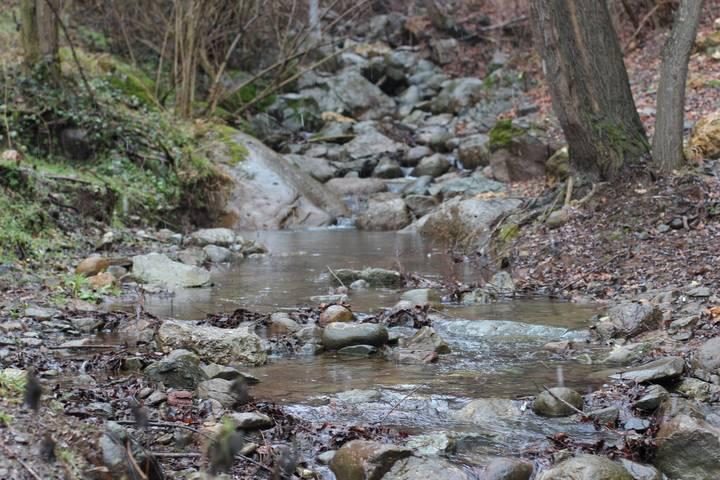 Forest-Stream- Running-Water-Sound