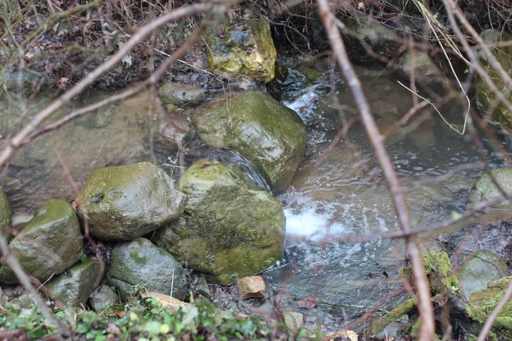 Forest-stream