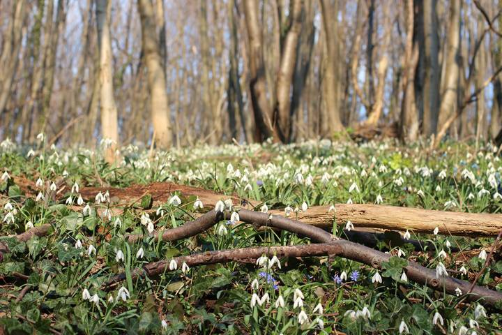 Birds-Singing-spring-forest