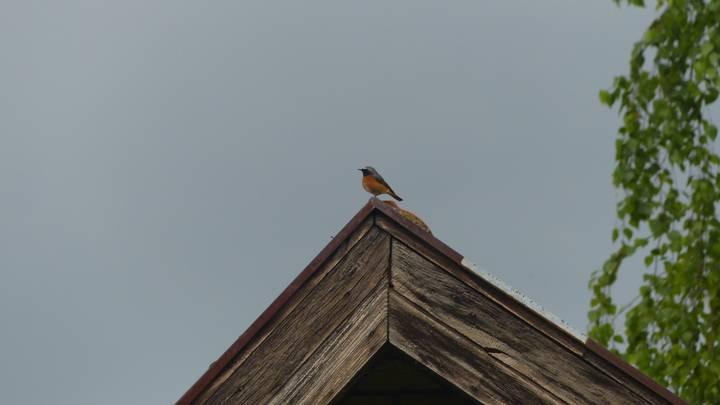 Birds-Singing-In-My-Garden